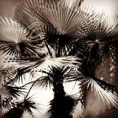 Palm tree shadows in Marrakesh, Morocco