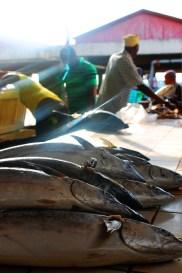 Early morning light at Kivukoni Fish Market in Dar Es Salaam
