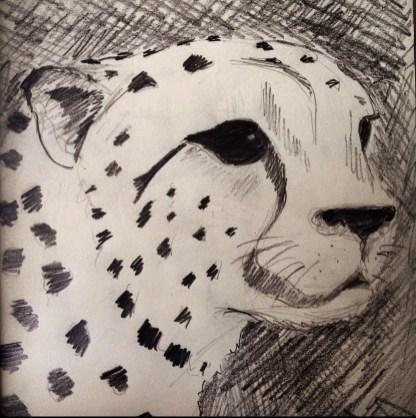Sketch of a cheetah in the Serengeti, Tanzania