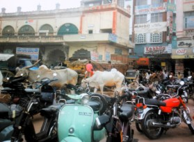 Motor bikes and cows in Mysore, India