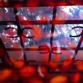 Window reflected in soaking Hyacinth beans