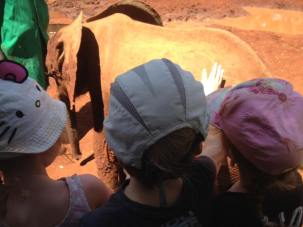 Patting a baby elephant at the David Sheldrick Centre in Nairobi