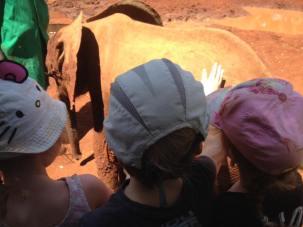 Patting a baby elephant at the David Sheldrick Centre in Nairobi