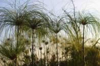 Plants on the shores of Lake Naivasha