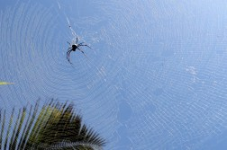 Massive spider in a massive web on the beach in Mombasa, Kenya