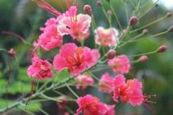 Tropical flowers at the Serena Beach Resort and Spa in Mombasa, Kenya