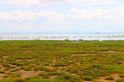 Flamingos in Amboseli National Park, Kenya