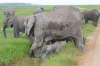 Mamma and baby elephant in Amboseli National Park