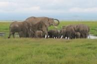 The elephants in Amboseli National Park, Kenya