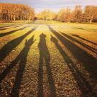 Long autumnal shadows in Sweden