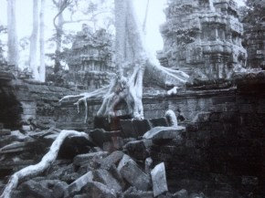 Trees covering Ta Prohm at Angkor in Cambodia