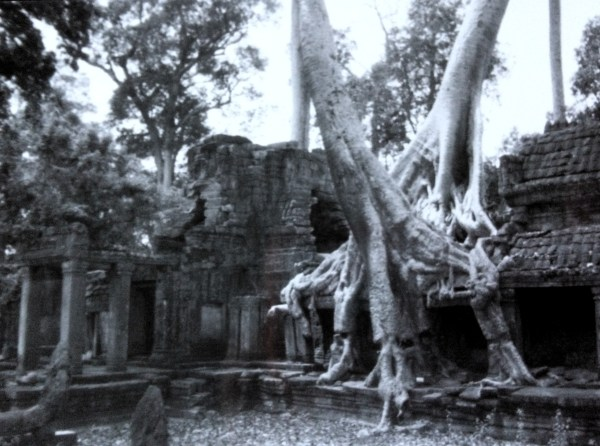 Trees covering Ta Prohm at Angkor Wat