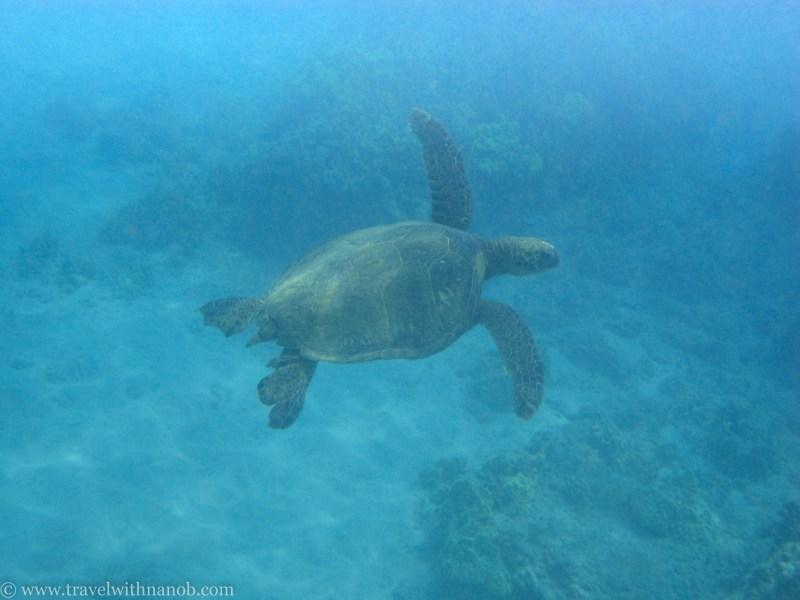 hawaii-maui-honeymoon-35