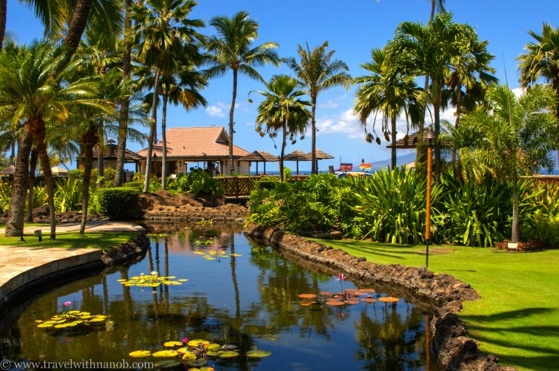 hawaii-maui-honeymoon-53