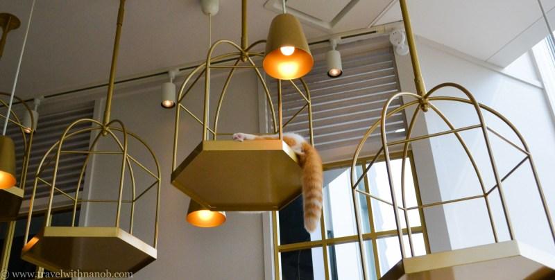 mocha-cat-cafe-7