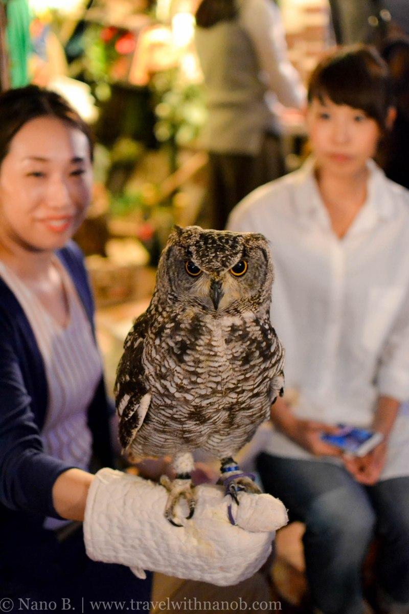 owl-cafe-tokyo-18