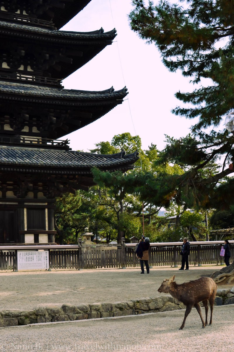 day-trip-to-nara-japan-18