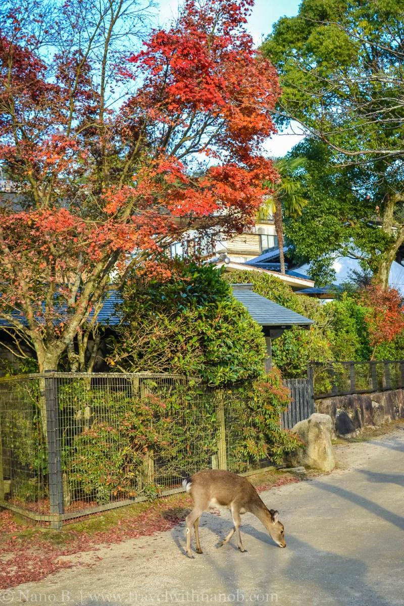 hiroshima-and-miyajima-54
