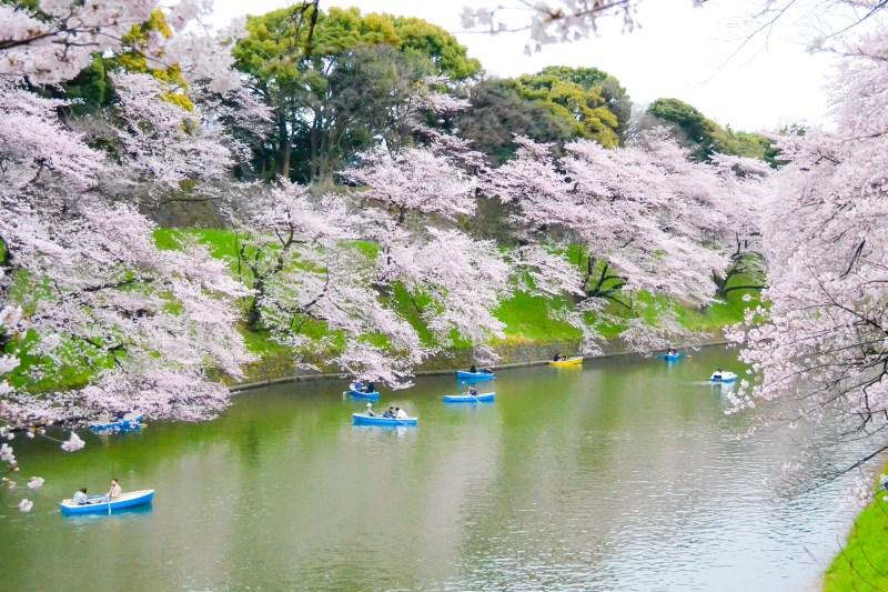 japan-flower-festivals-3
