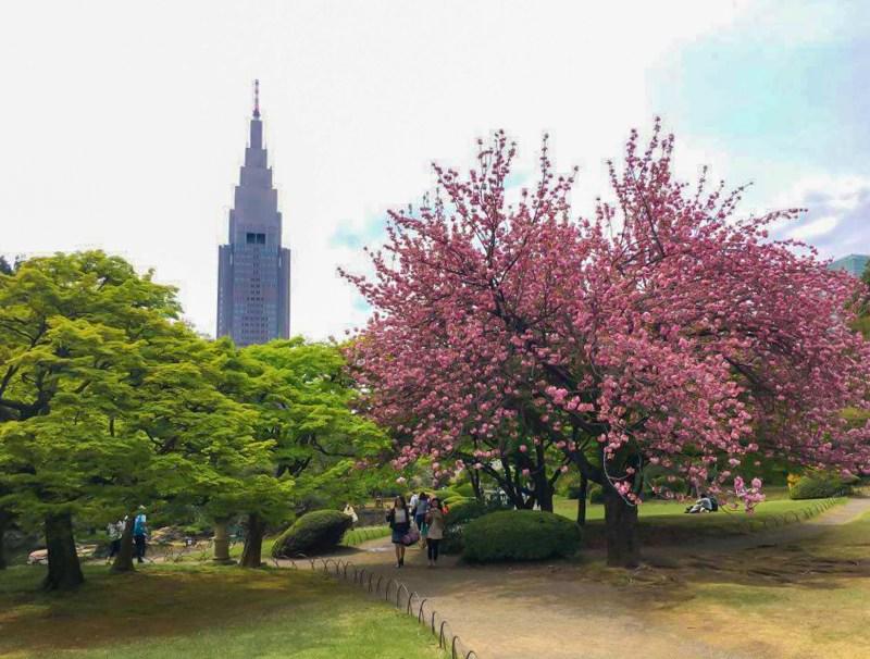 japan-flower-festivals-6
