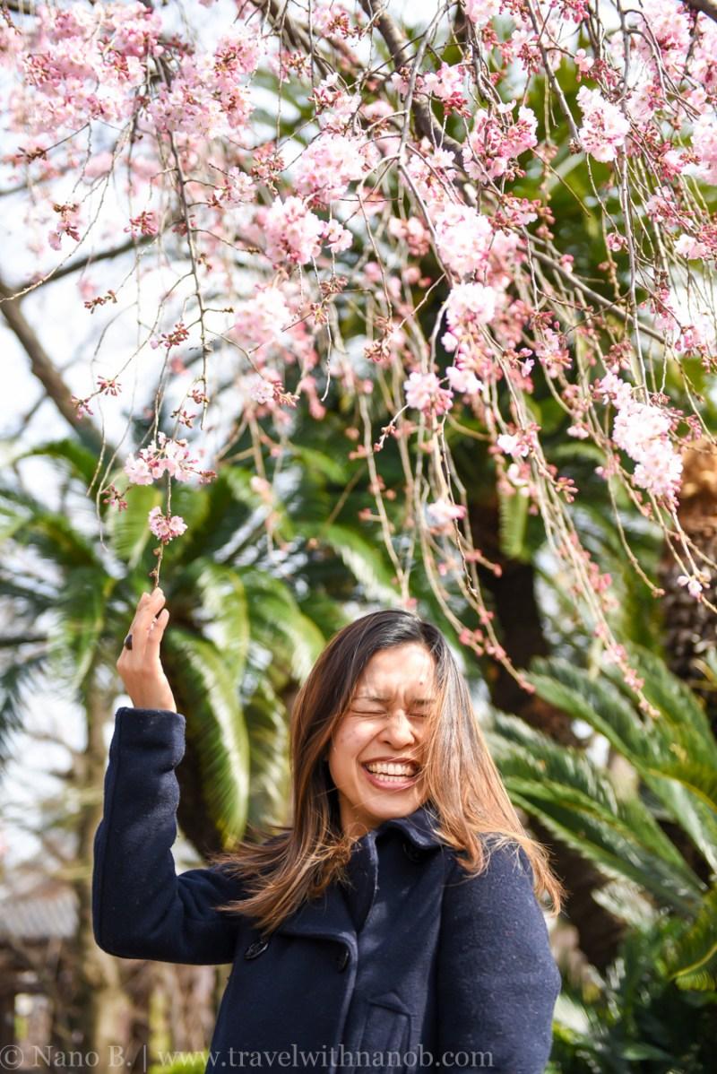 cherry-blossom-tokyo-27