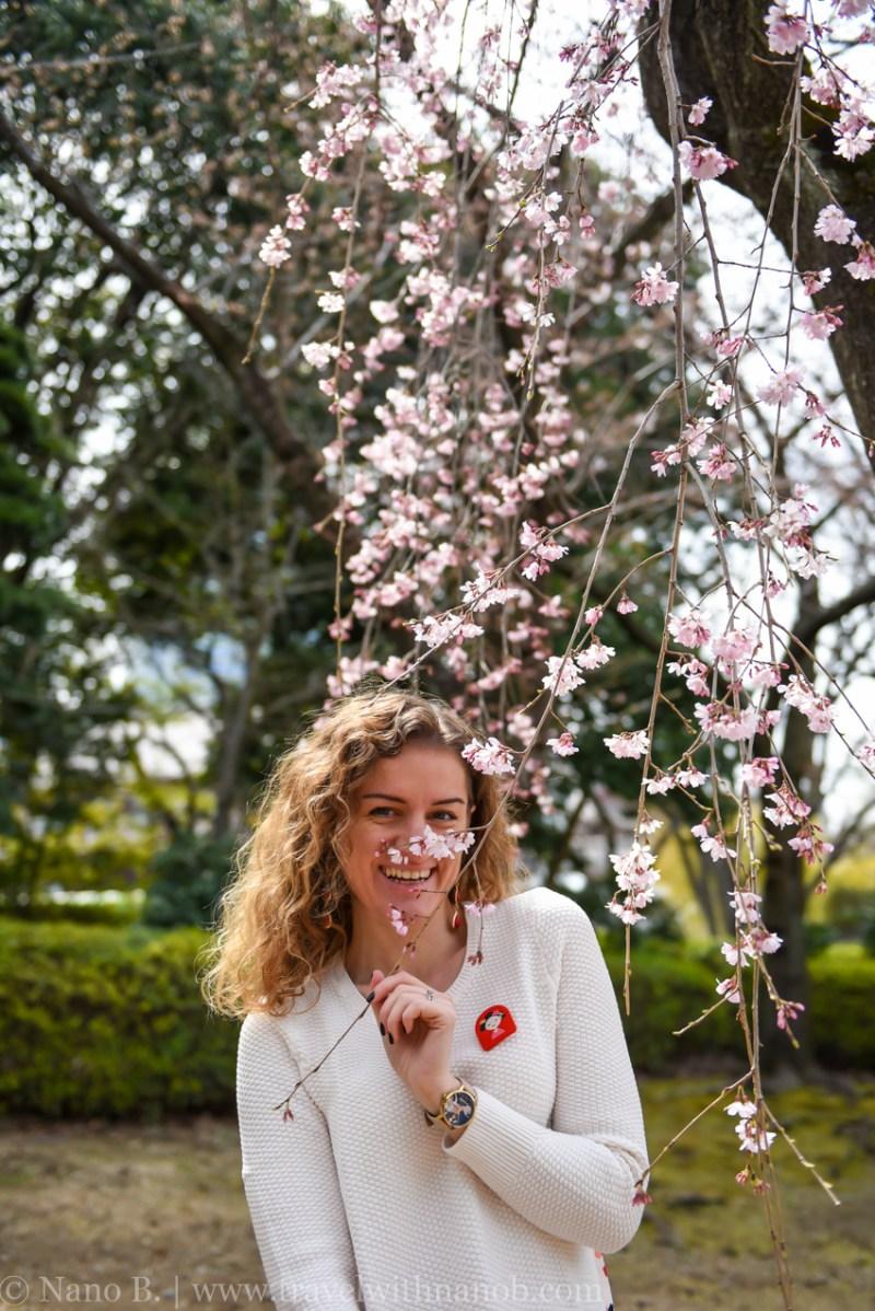 cherry-blossom-tokyo-6