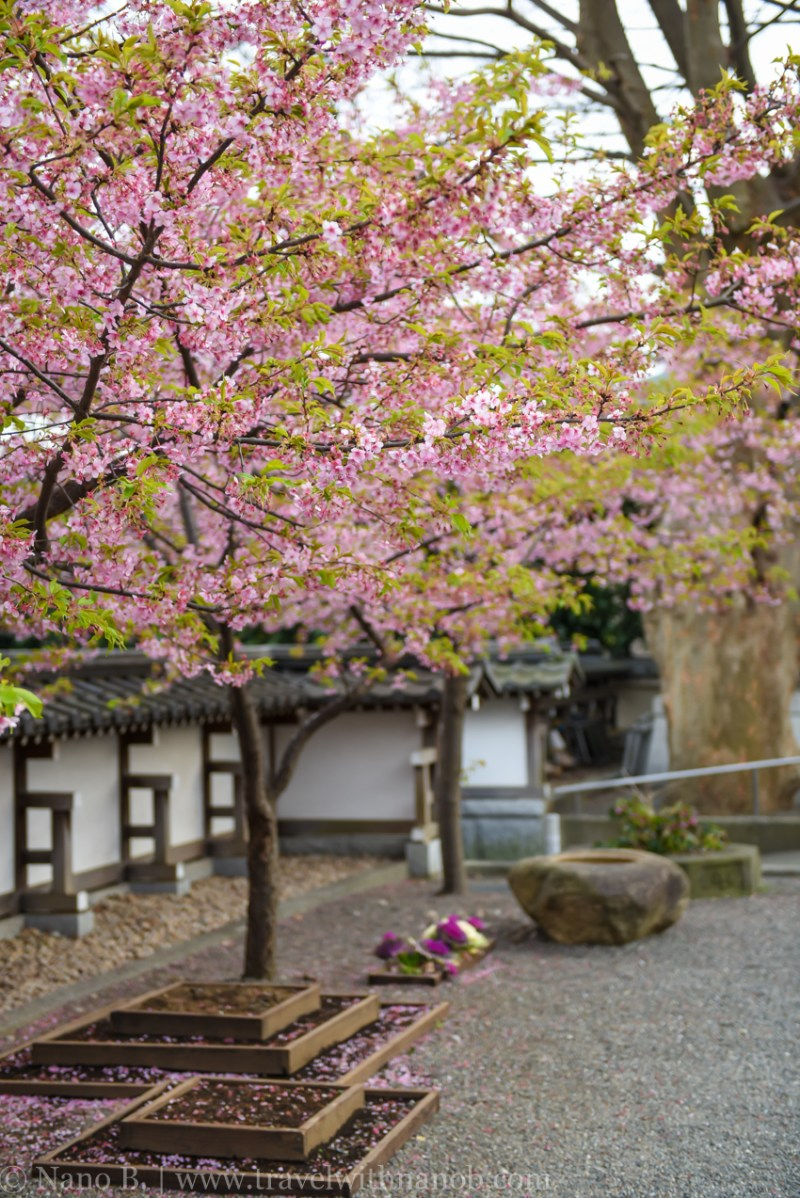 tokyo-shrines-35