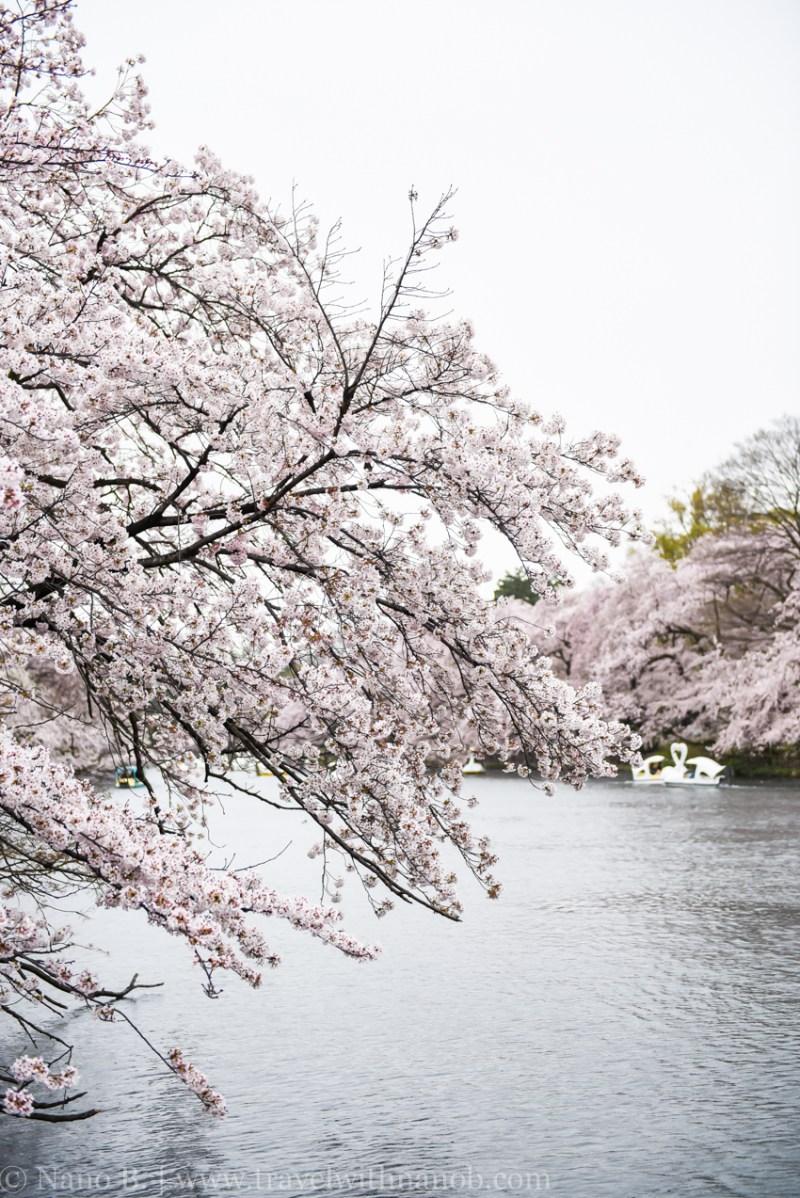 inokashira-park-20