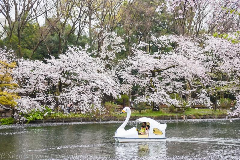 inokashira-park-4