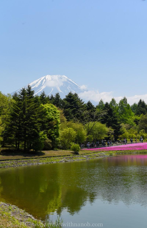 Fuji-Shibazakura-Festival-17