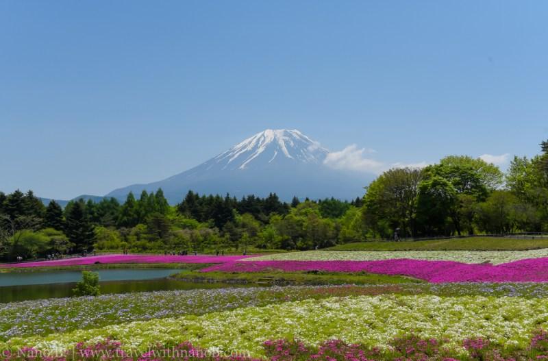 Fuji-Shibazakura-Festival-21