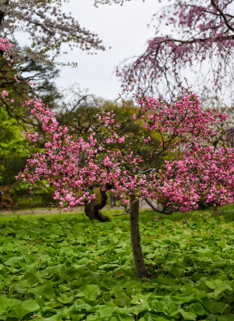 shinjuku-gyoen-garden-tokyo-10