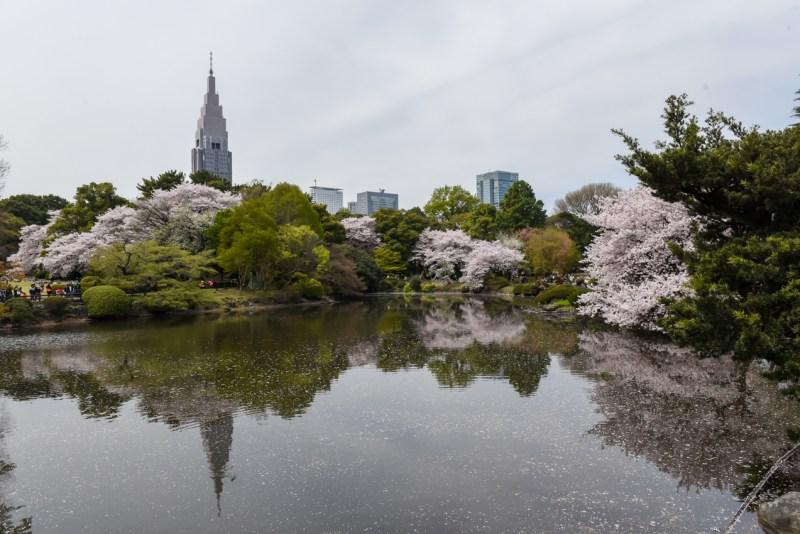 shinjuku-gyoen-garden-tokyo-22