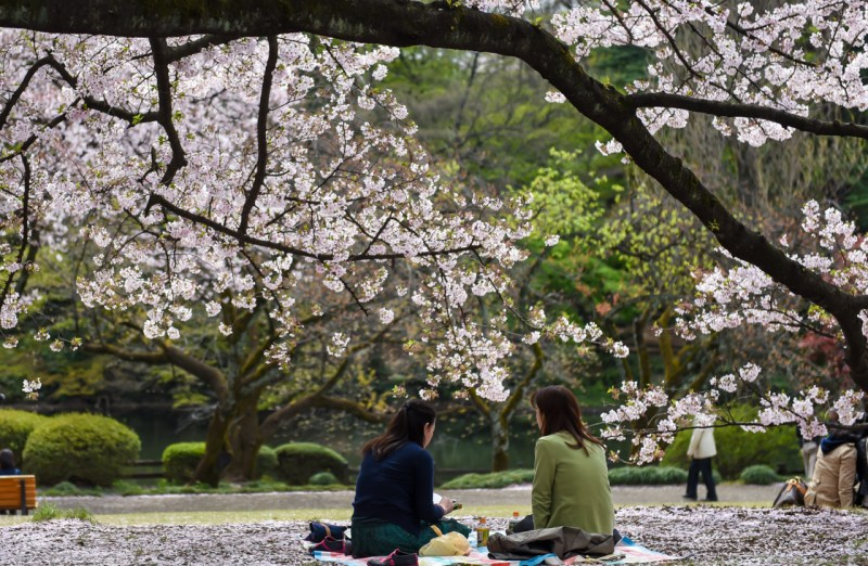 shinjuku-gyoen-garden-tokyo-24