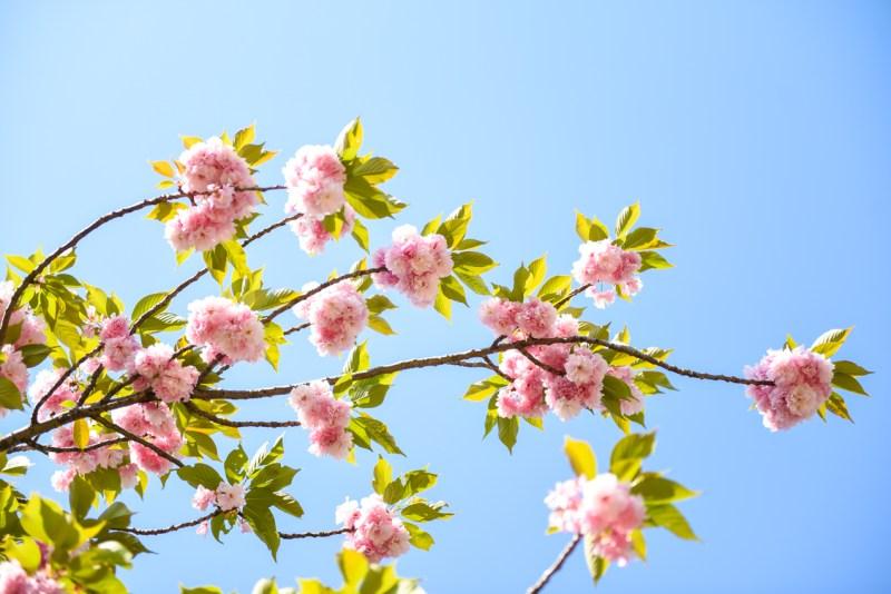 shinjuku-gyoen-garden-tokyo-42