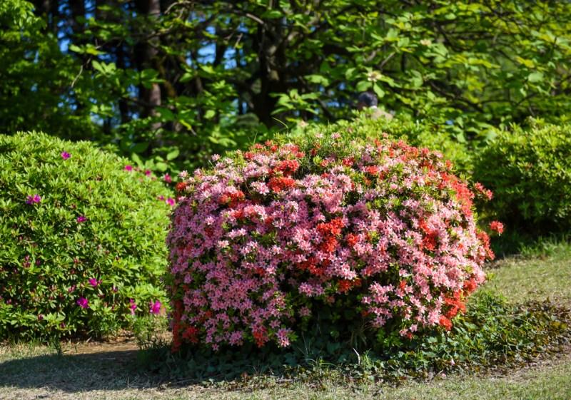 shinjuku-gyoen-garden-tokyo-47