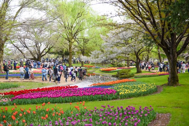 Showa-Kinen-Park-Tokyo-7
