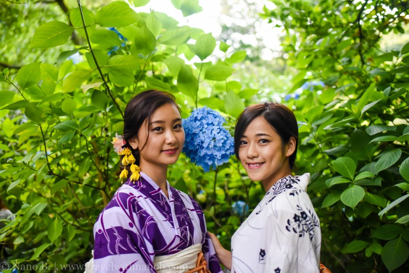 chiba-hydrangea-garden-7