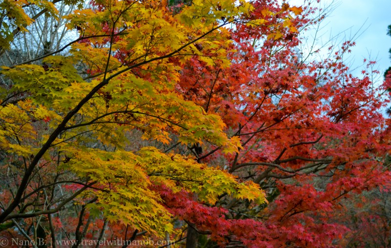 kyoto-autumn-leaves-20