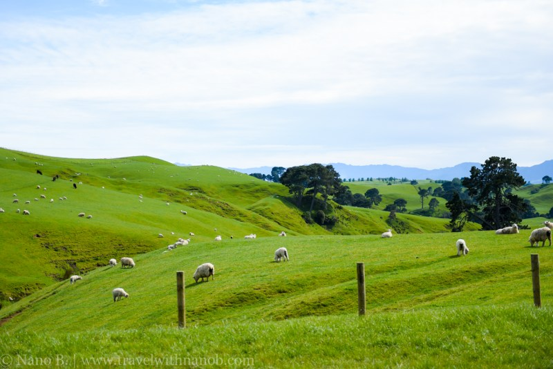 hobbiton-tour-auckland-new-zealand-1