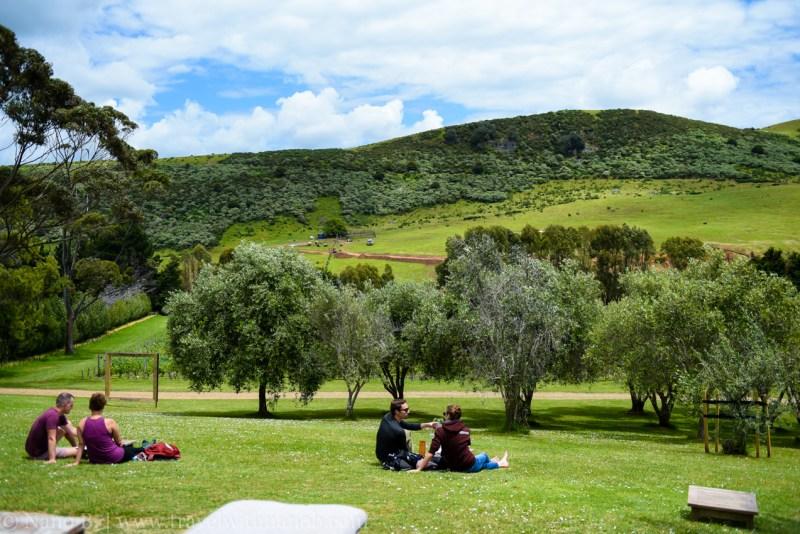 waiheke-island-wine-tour-11