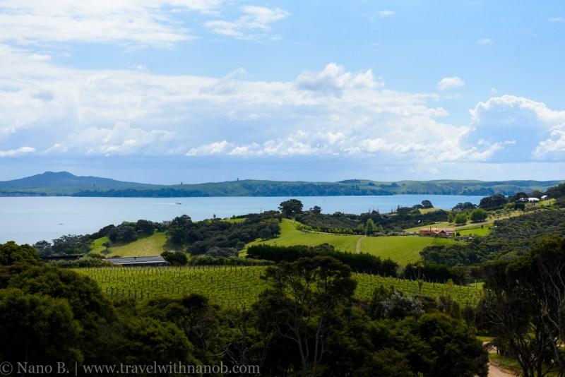 waiheke-island-wine-tour-29