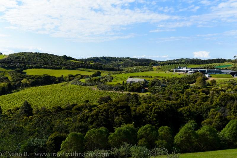waiheke-island-wine-tour-49