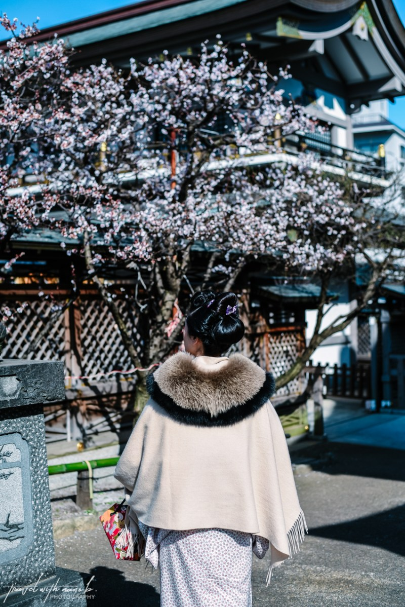 plum-blossoms-tokyo-7