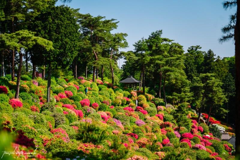 azalea-garden-shiofune-kannon-ji-temple-29