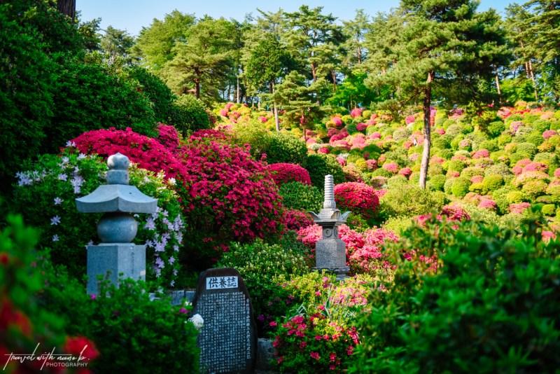 azalea-garden-shiofune-kannon-ji-temple-39