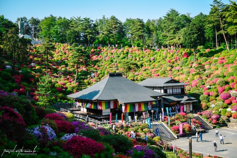azalea-garden-shiofune-kannon-ji-temple-43