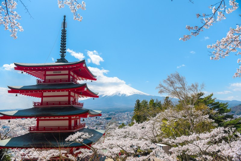 cherry-blossoms-mt-fuji-japan-11