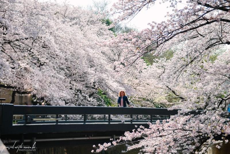 cherry-blossoms-tokyo-17