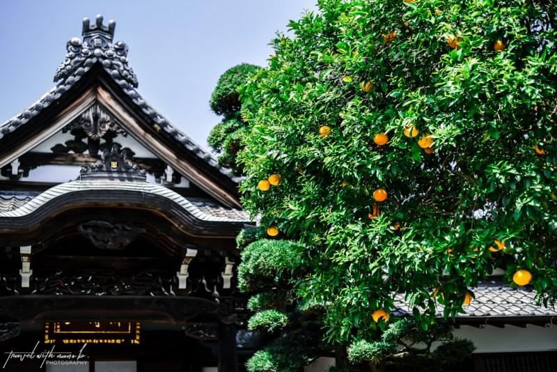 tokyo-yanesen-yanaka-things-to-do-62